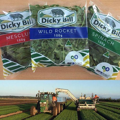 Dicky Bill 2